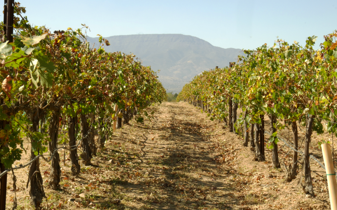 Wine making in Arizona Wine Country, An interview with Alcantara's Wine maker, Dominic Burke